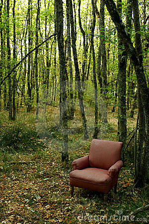 3d Forest Wallpaper Backgrounds Chair In The Woods Stock Image Image 1661691