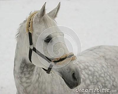 Wallpaper Horse 3d Cheval Gris Sur La Neige Image Libre De Droits Image