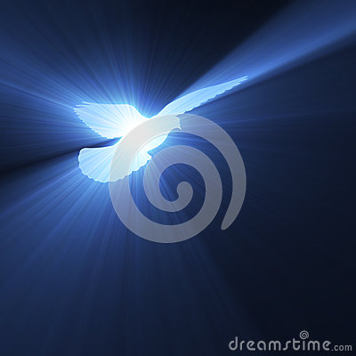 Free Animated Autumn Wallpaper Dove Flying With Holy Light Flares Royalty Free Stock
