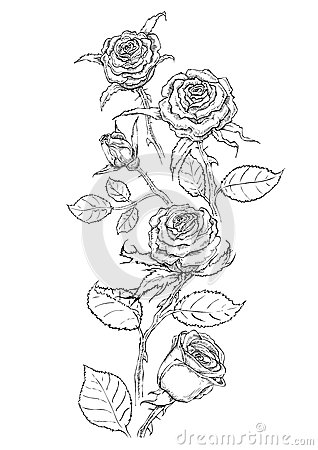 Black And White Victorian Wallpaper Drawing Roses Stock Vector Image 54945990