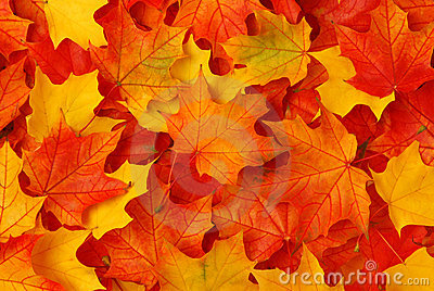 Design Love Fest Fall Wallpaper Fall Leaves Royalty Free Stock Image Image 14061326