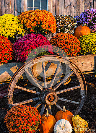 Pumpkins Fall Wallpaper Fall Scene Stock Photo Image 46841926