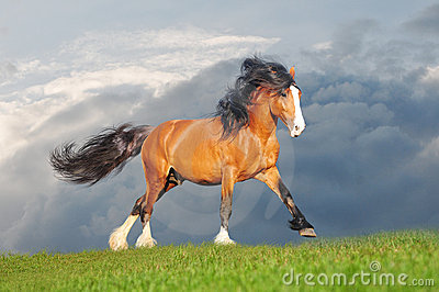 3d Free Wallpaper And Screensavers Free Draft Horse Royalty Free Stock Photography Image