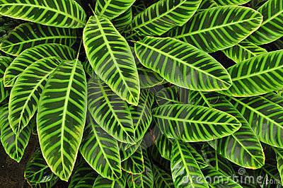 Download Koi Fish 3d Wallpaper Green Tropical Leaves Background Stock Photos Image