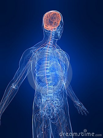 3d All Wallpaper Free Download Highlighted Nervous System Royalty Free Stock Images