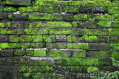 3d Stone Wallpaper For Walls Texture Of Old Stone Wall Covered Green Moss In Fort