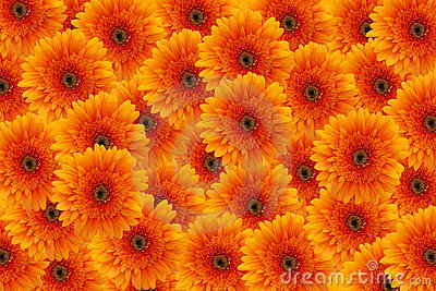 3d Animation Animals Wallpaper Orange Flowers Background Stock Photo Image 1736710