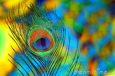 3d Snake Wallpaper Hd Peacock Feather Background Royalty Free Stock Image