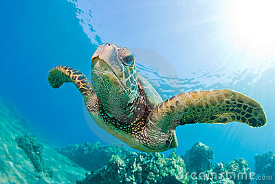 Free 3d Dolphin Wallpaper Sea Turtle Royalty Free Stock Image Image 12059266