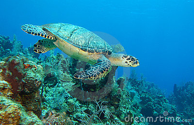 3d Grey Stone Wallpaper Sea Turtle Swimming Underwater Stock Images Image 5706144