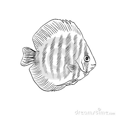 Wallpaper Design Black Sketch Of A Fish Stock Vector Image 45033699