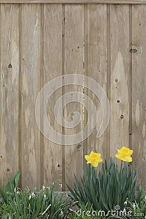 3d Design Flower Wallpaper Spring Background Stock Photography Image 675892