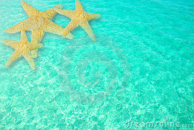 3d Wallpaper Under The Sea Starfish In Clear Ocean Water Stock Images Image 5984514