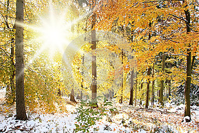 3d Animation Animals Wallpaper Sunny Winter Forest Scene Royalty Free Stock Photo Image