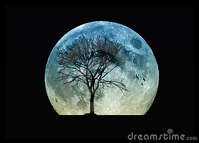 Only Black Wallpaper Tree Silhouette And The Moon Stock Photo Image 11177070