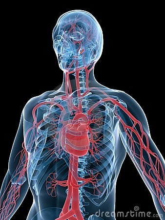 Wallpaper 2d 3d Vascular System Stock Photo Image 5499020