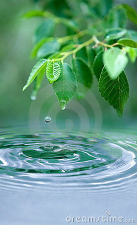 Zen Quote Wallpaper Water Drop And Wet Leaves Royalty Free Stock Photography