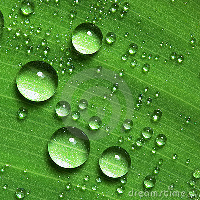 Beautiful Leaf Hd Wallpaper Water Droplets On Leaf Royalty Free Stock Photo Image