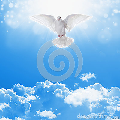 3d Fountain Wallpaper White Dove In Skies Stock Photo Image 52059688