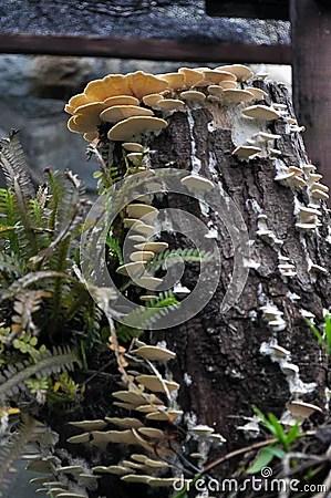 White Shelf Fungi Stock Photo Image 52377957