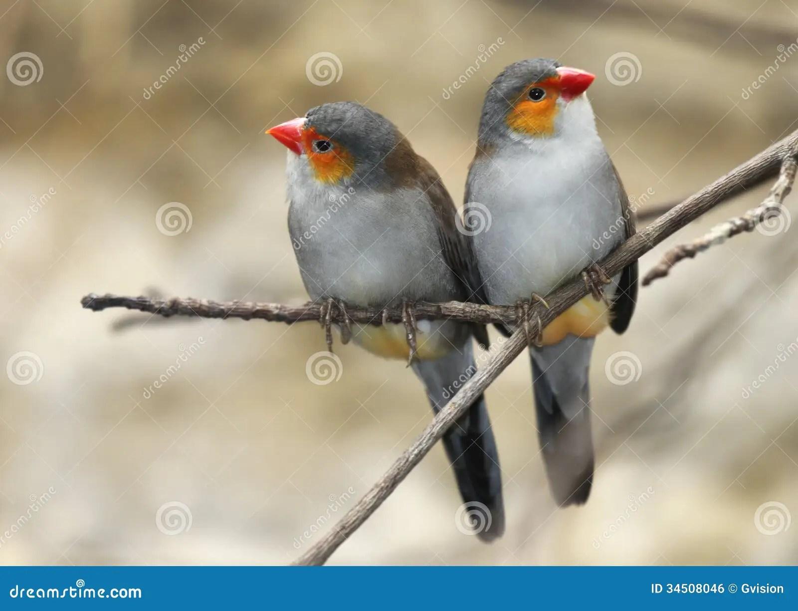Wallpaper 3d Free Download Pc 两只鸟