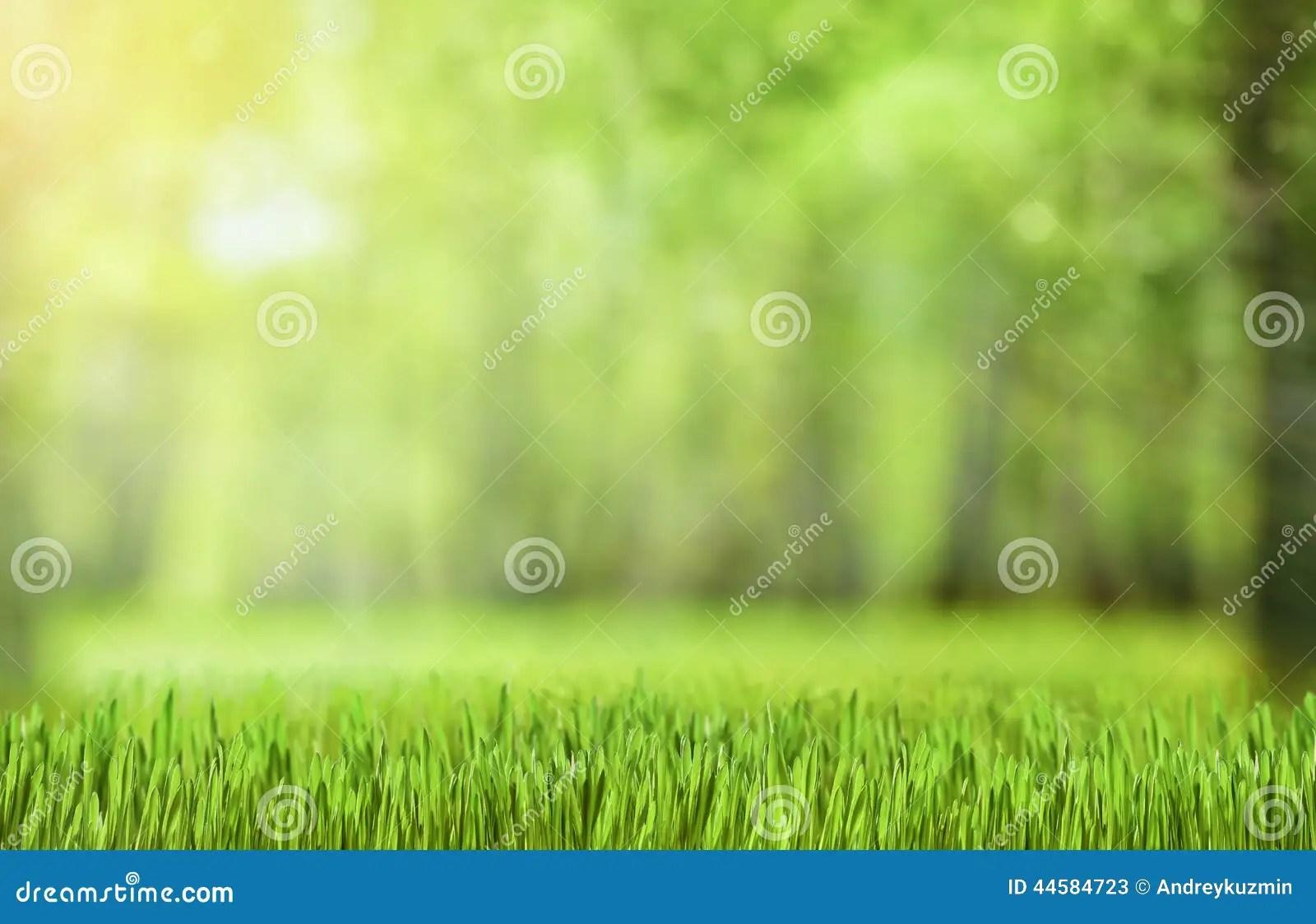 Wallpaper Primavera Hd 自然绿色森林背景 库存图片 图片 包括有 Defocus 森林 自然 抽象 模式 蓝蓝