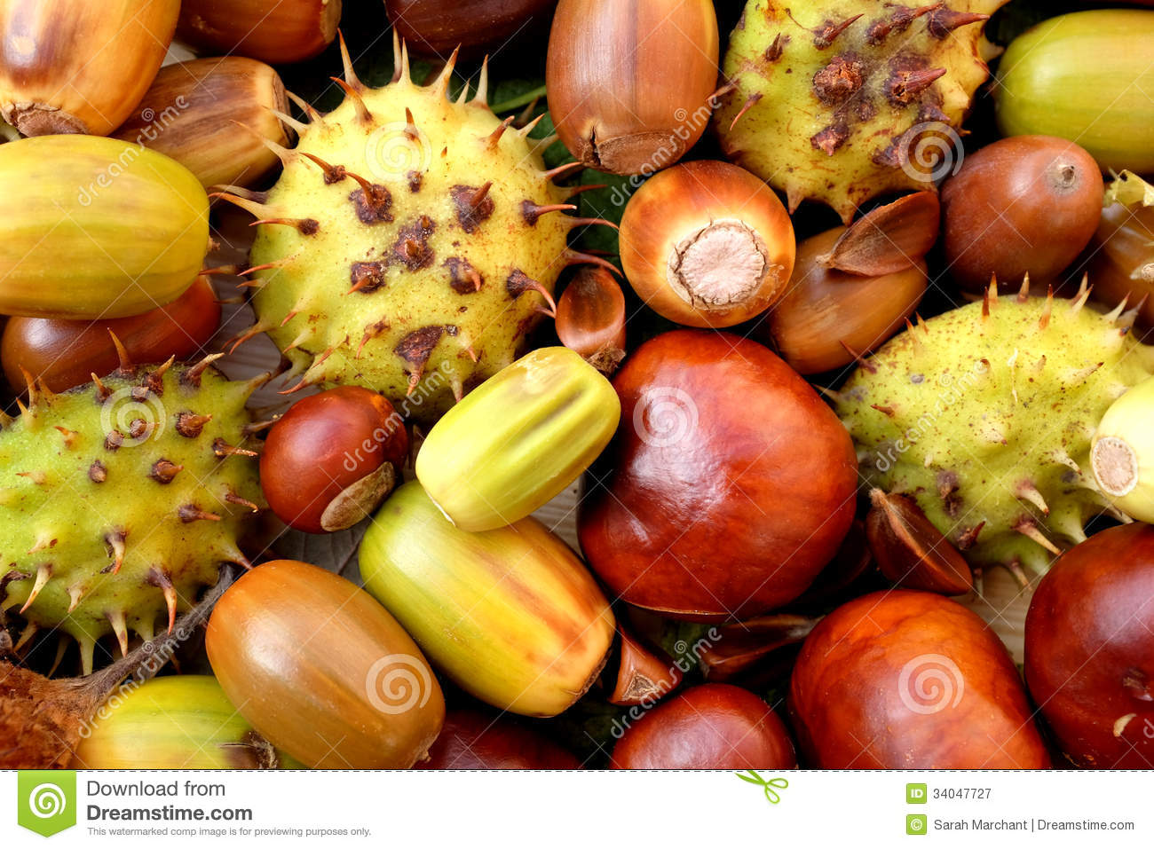 Fall Horse Wallpaper Acorns Conkers Horse Chestnut Cases And Beechnuts