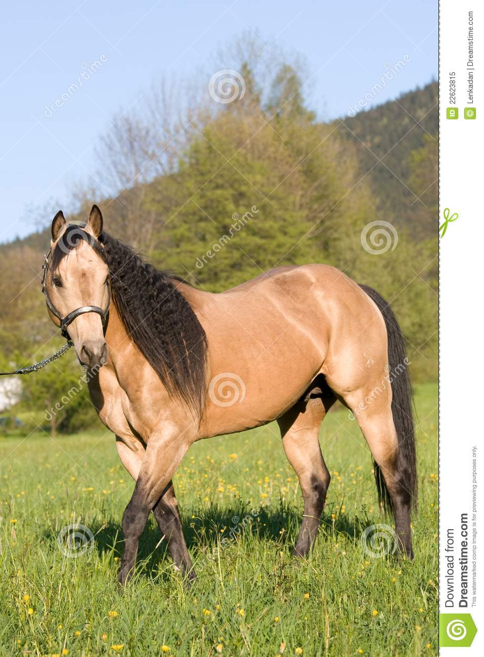 Beautiful Wallpapers 3d Animation American Quarter Horse Stallion Posing Royalty Free Stock