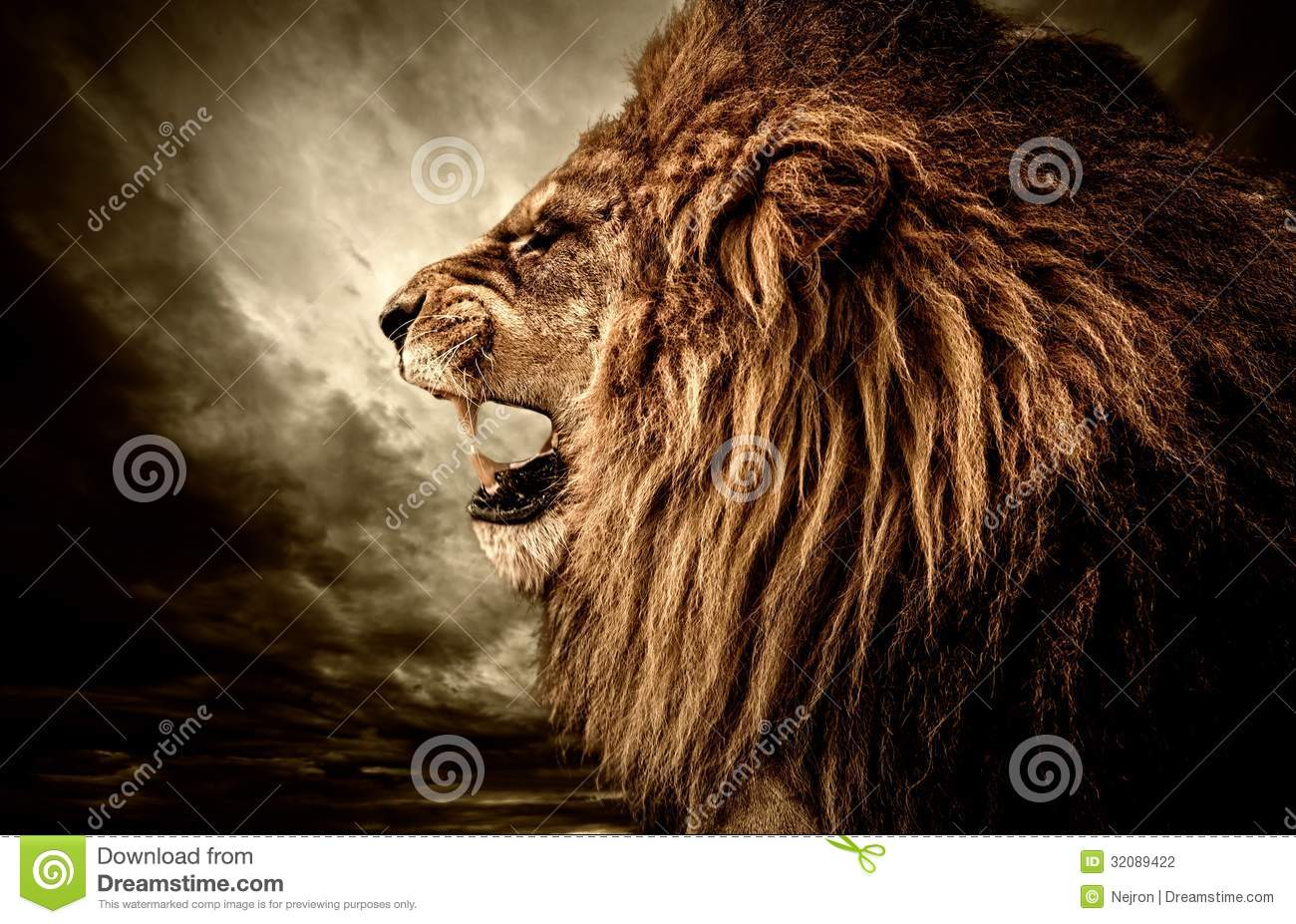 Peacock Wallpaper 3d Angry Lion Stock Photography Image 32089422