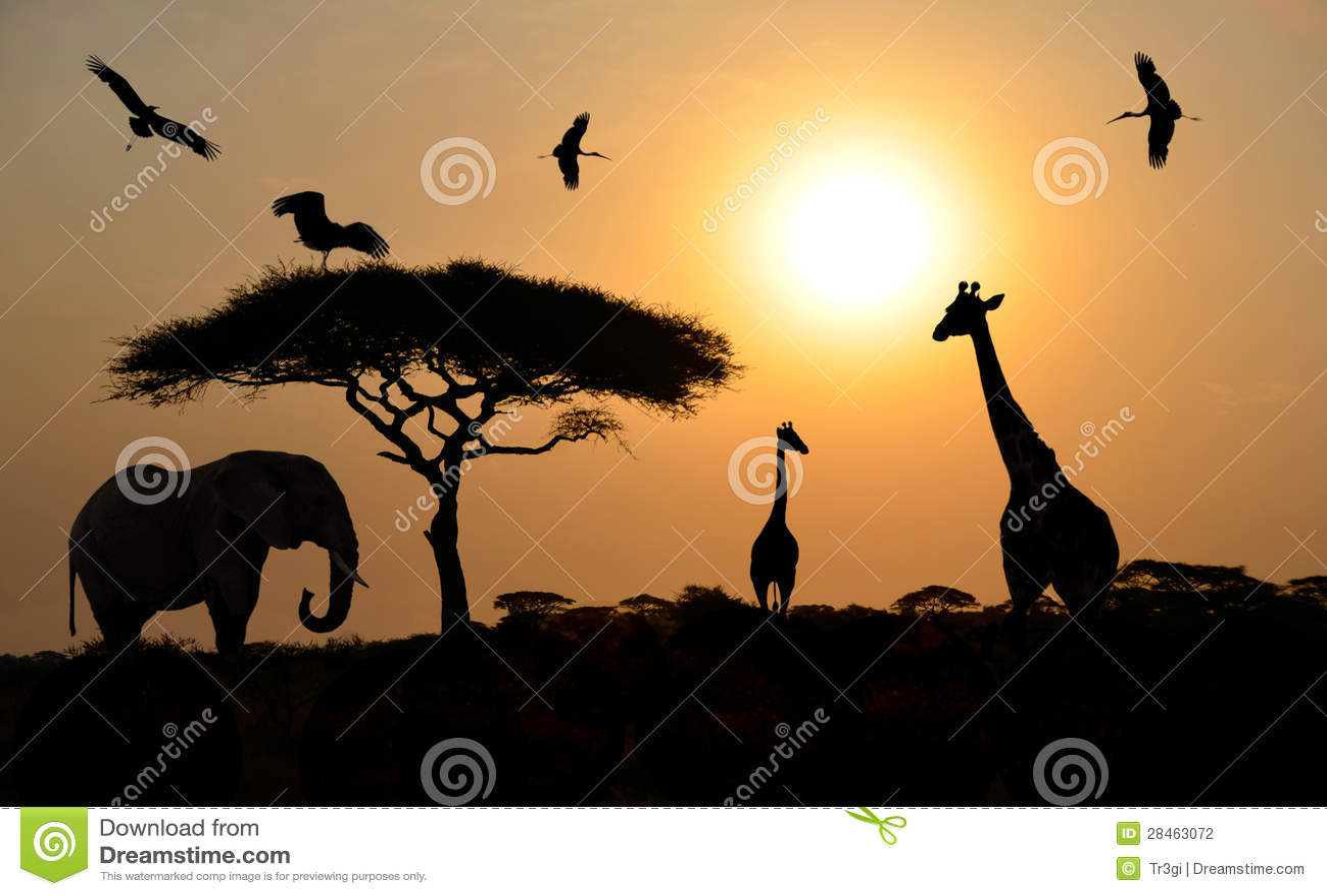 Safari Animal Wallpaper Animal Silhouettes Over Sunset On Safari In African