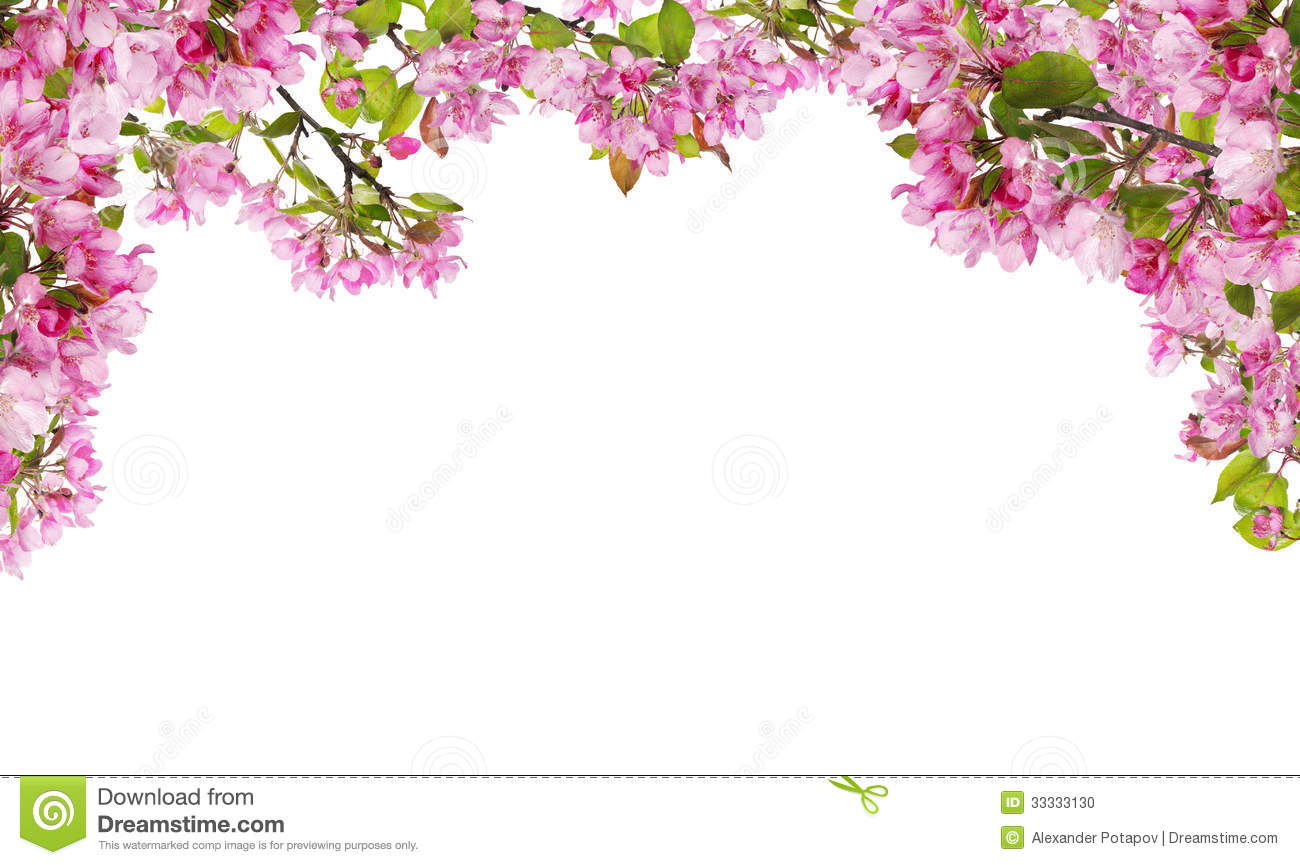 Rose Petals Falling Wallpaper Transparent Gif Apple Tree Pink Flower Branches Half Frame Stock Photo