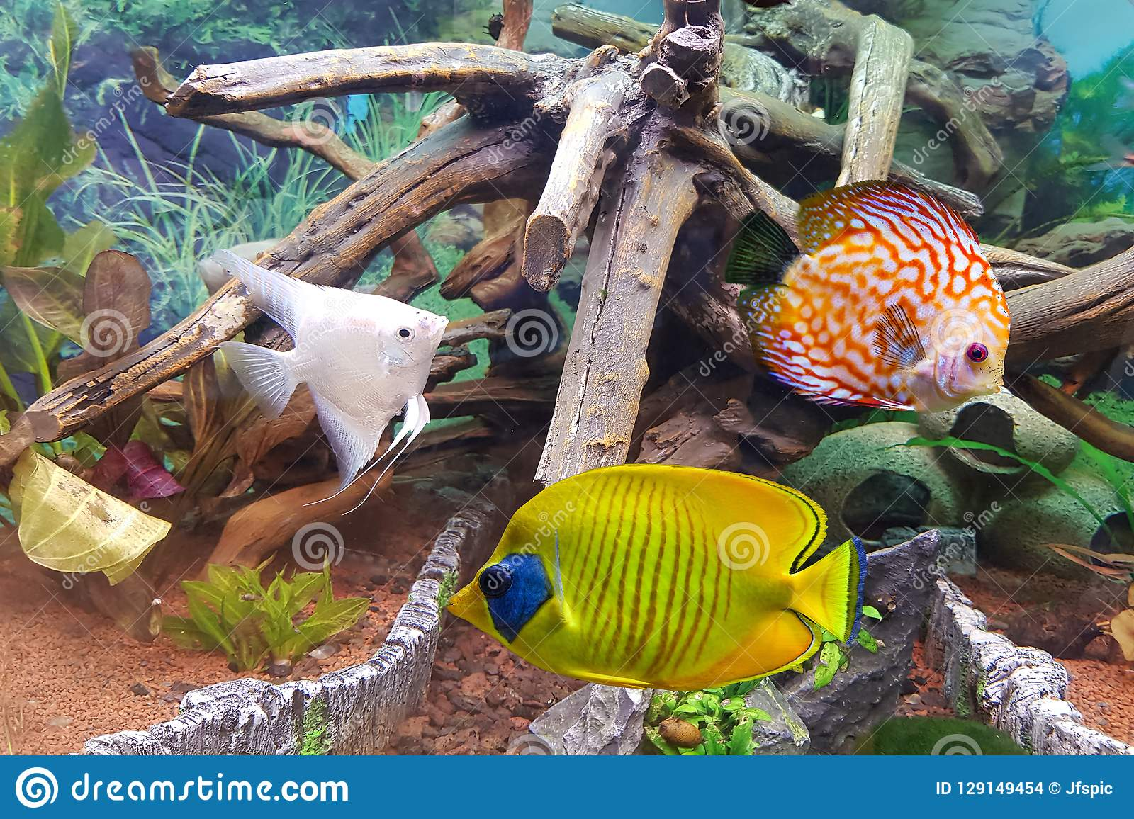Decoration Interieur Aquarium Aquarium D Intérieur Un Aquarium D Eau Douce Tropical Photo Stock