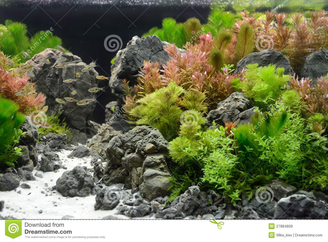 Decoration Interieur Aquarium Aquarium Decoration Stock Image Image Of Green Decoration 27884809