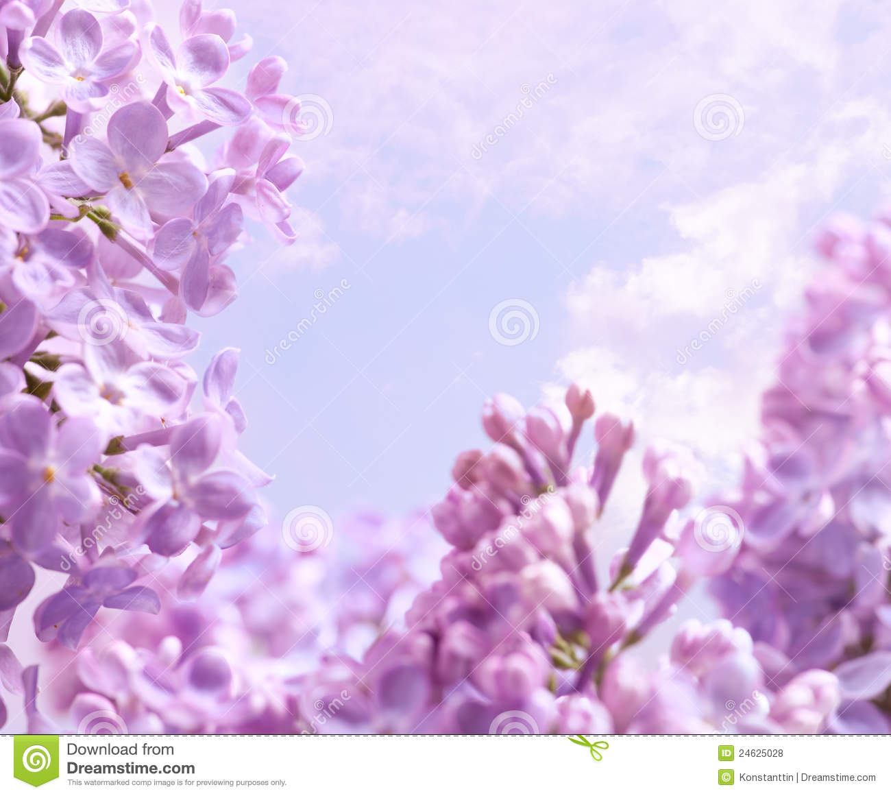 Lavender Color Wallpaper Hd Art Spring Lilac Flower Background Royalty Free Stock