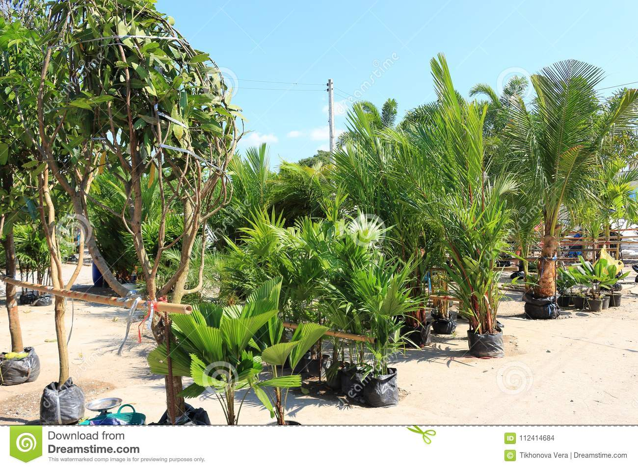 Asian Plants For Sale Asian Greenhouse Plant Market Stock Photo Image Of Environment