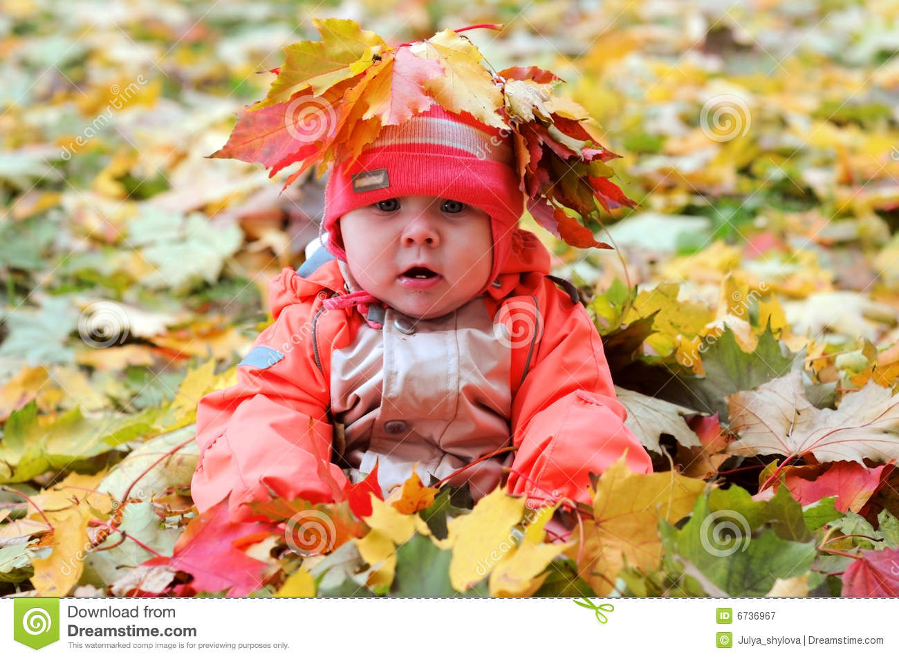 Maple Leaf Wallpaper For Fall Season Autumn Baby Stock Image Image Of Months Season Blue