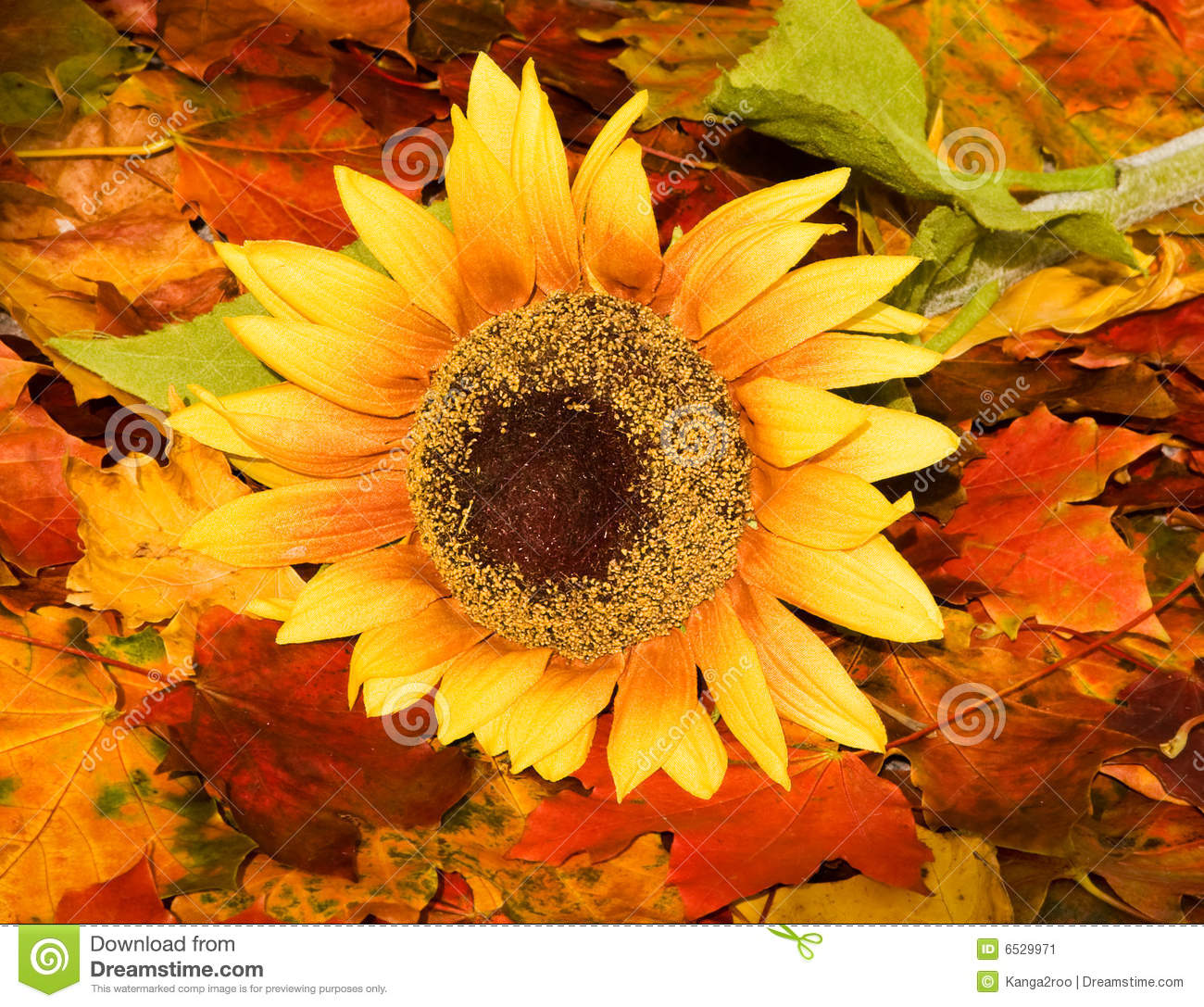 Autumn Leaf Fall Wallpaper Autumn Background With A Sunflower Stock Image Image