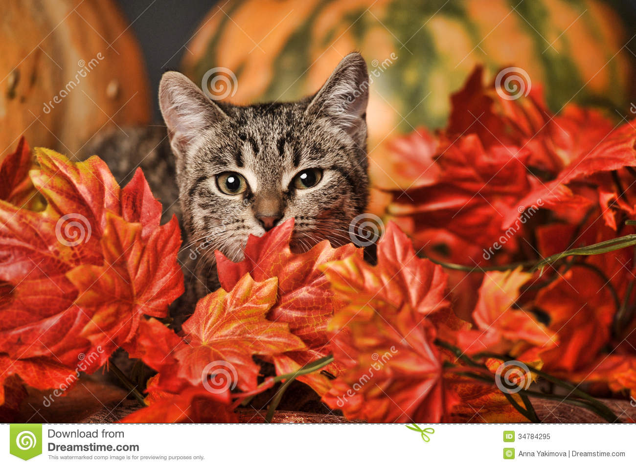 Cute Cat With Good Morning Wallpaper Autumn Cat Stock Image Image Of Dramatic Falling Beauty