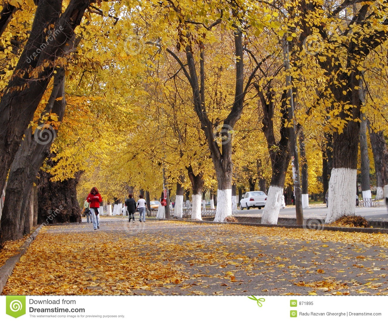Fall Paintings Wallpaper Autumn City Street Stock Image Image Of Tree Street
