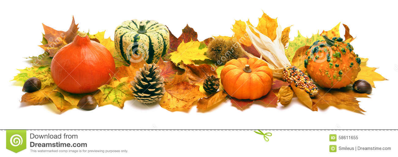 Fall White Pumpkins Wallpaper Autumn Decoration Banner Stock Image Image Of Nature