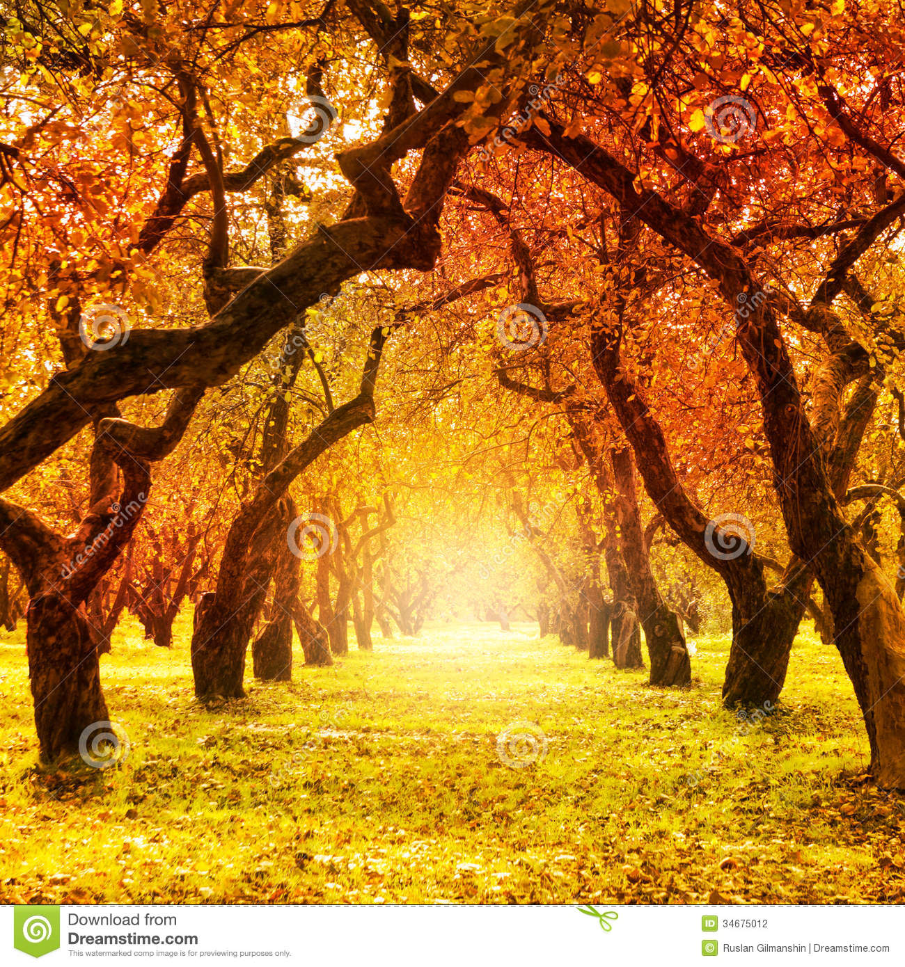 Colorful Fall Scene Wallpaper Autumn Fall Autumnal Park Stock Photo Image Of Brown
