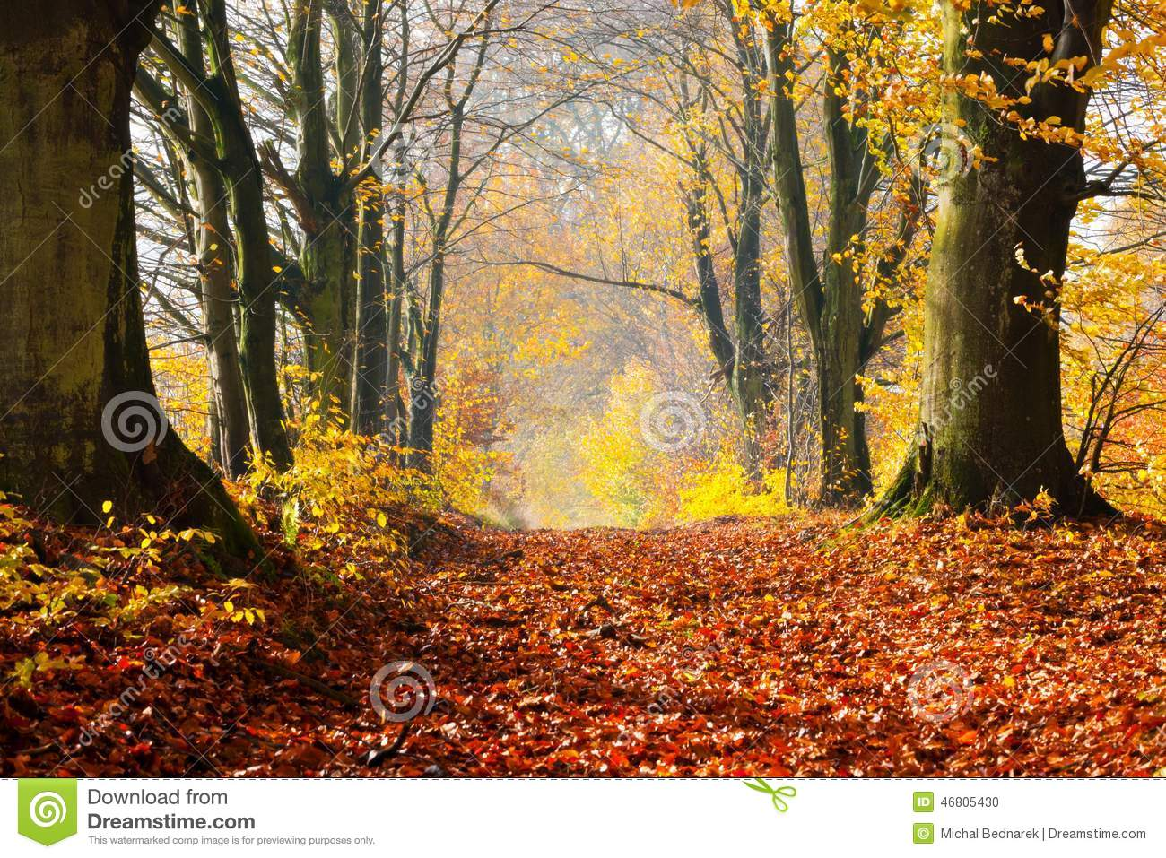 Free Fall Foliage Wallpaper Autumn Fall Forest Path Of Red Leaves Towards Light