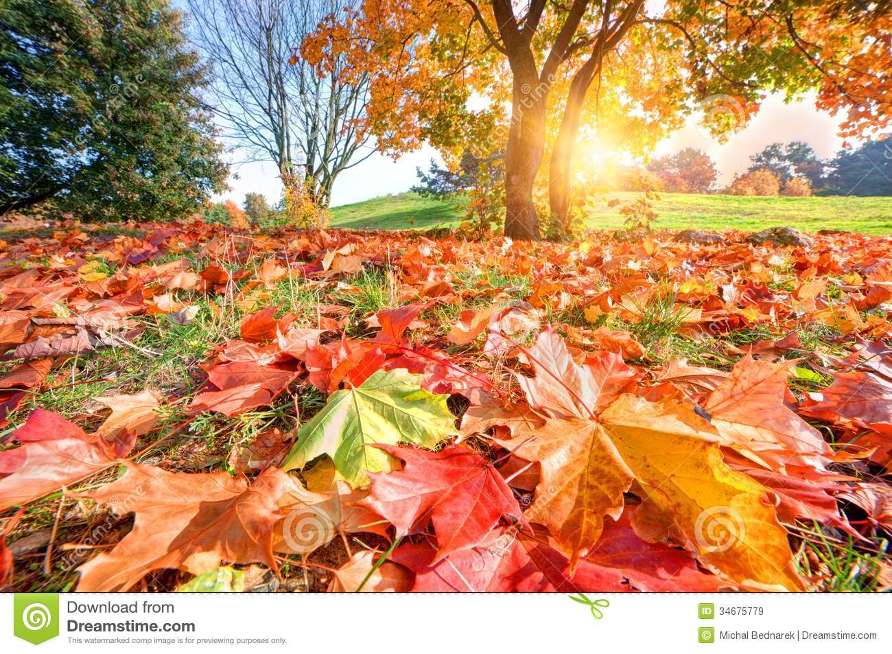 Fall Flowers And Pumpkins Wallpaper Autumn Fall Landscape In Park Royalty Free Stock Images