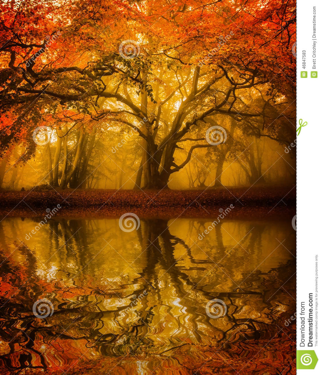 Vector Wallpaper Fall Colors Autumn Fall Tree Refelction Stock Image Image 46847583