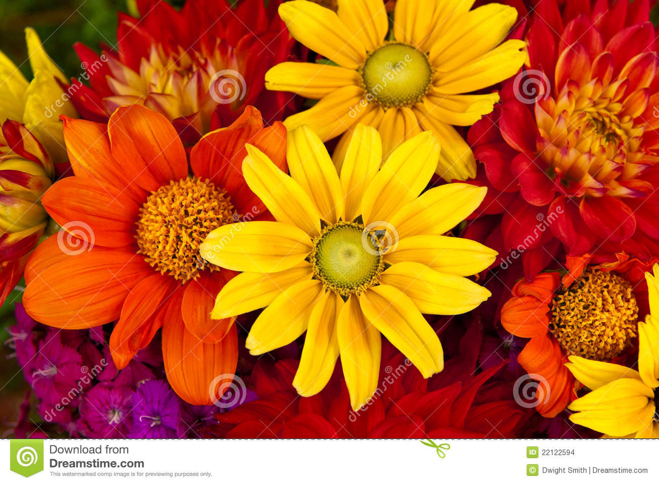 Colorful Fall Scene Wallpaper Autumn Flowers Stock Images Image 22122594