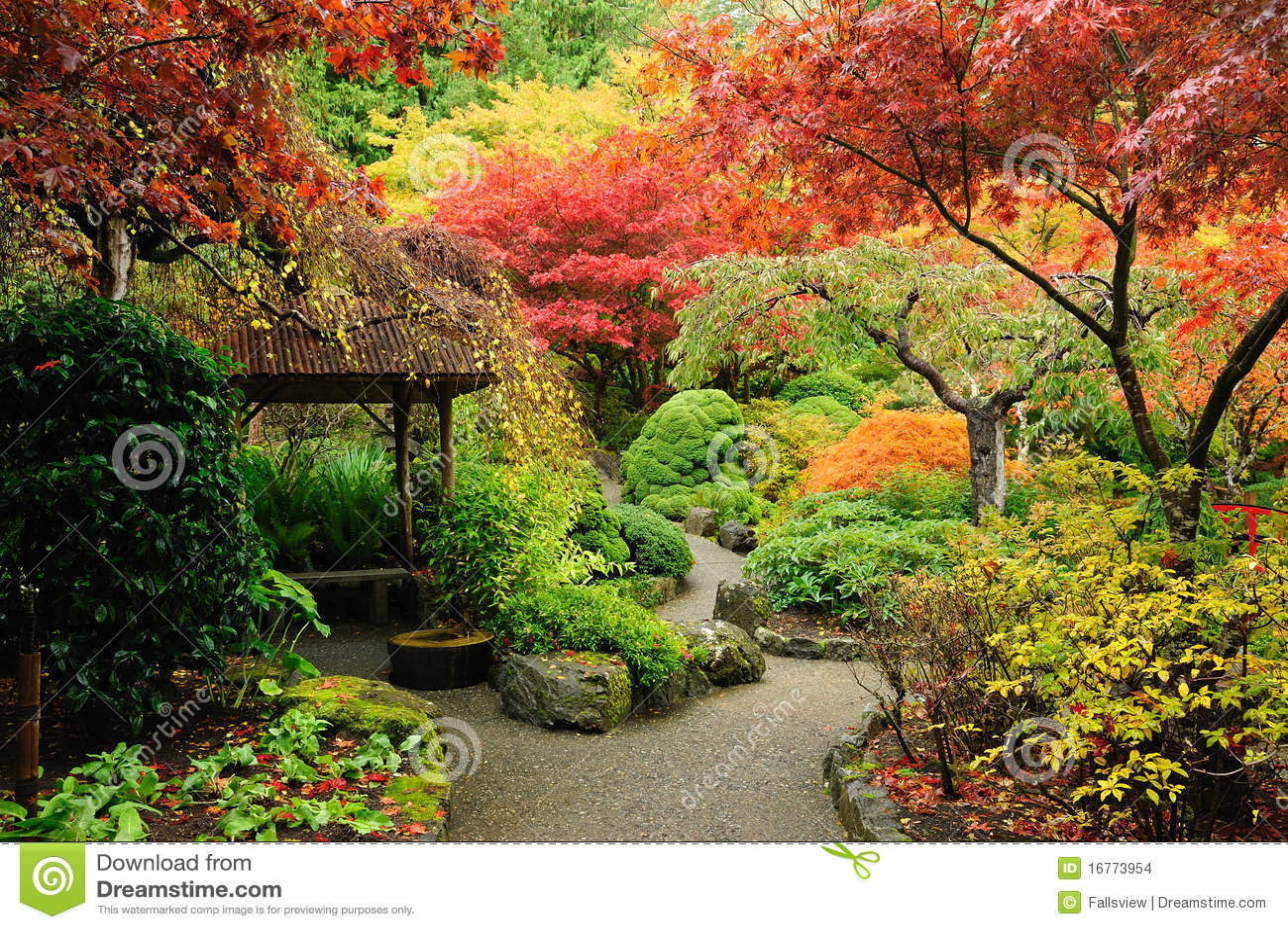 Maple Leaf Wallpaper For Fall Season Autumn Japanese Garden Stock Images Image 16773954