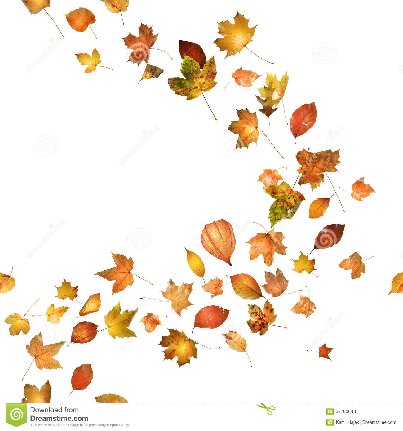 Falling Leaves Wallpaper Free Download Autumn Leaf Breeze Stock Photo Image 57786644