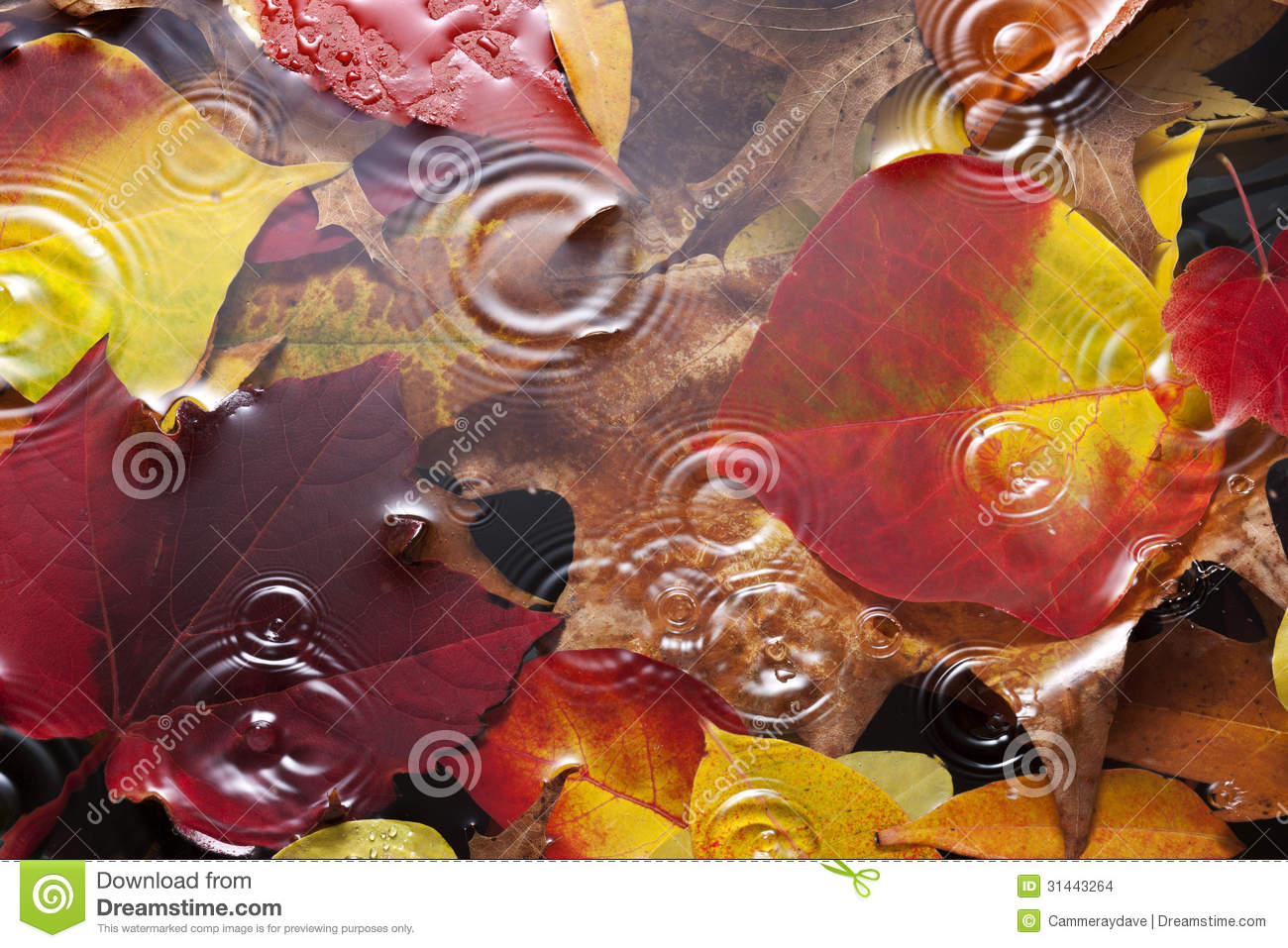 Vector Wallpaper Fall Colors Autumn Leaves Water Rain Background Stock Images Image