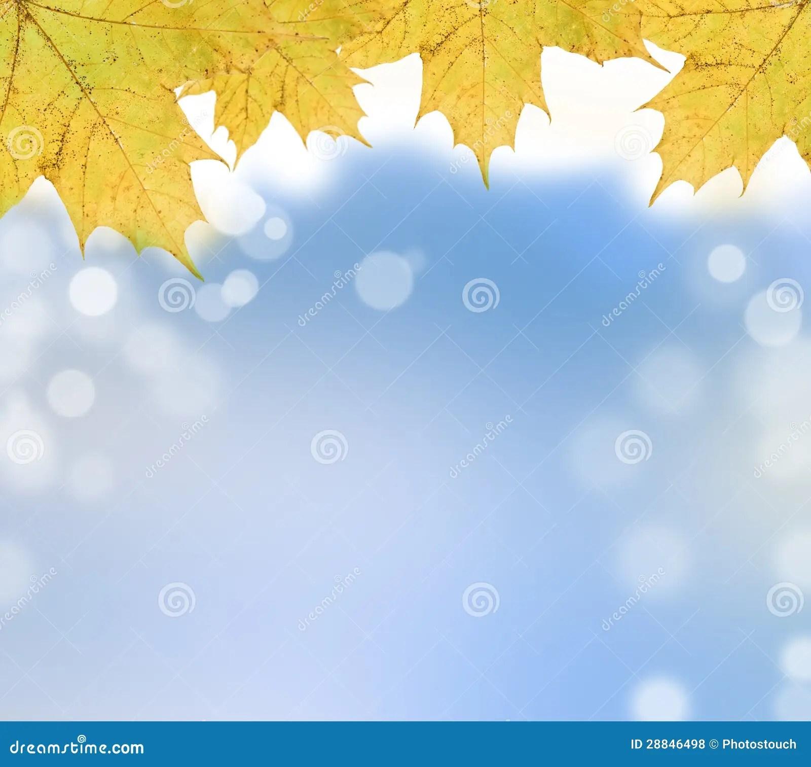 Fall Leaves Wallpaper Border Autumn Leaves On Soft Background Stock Illustration