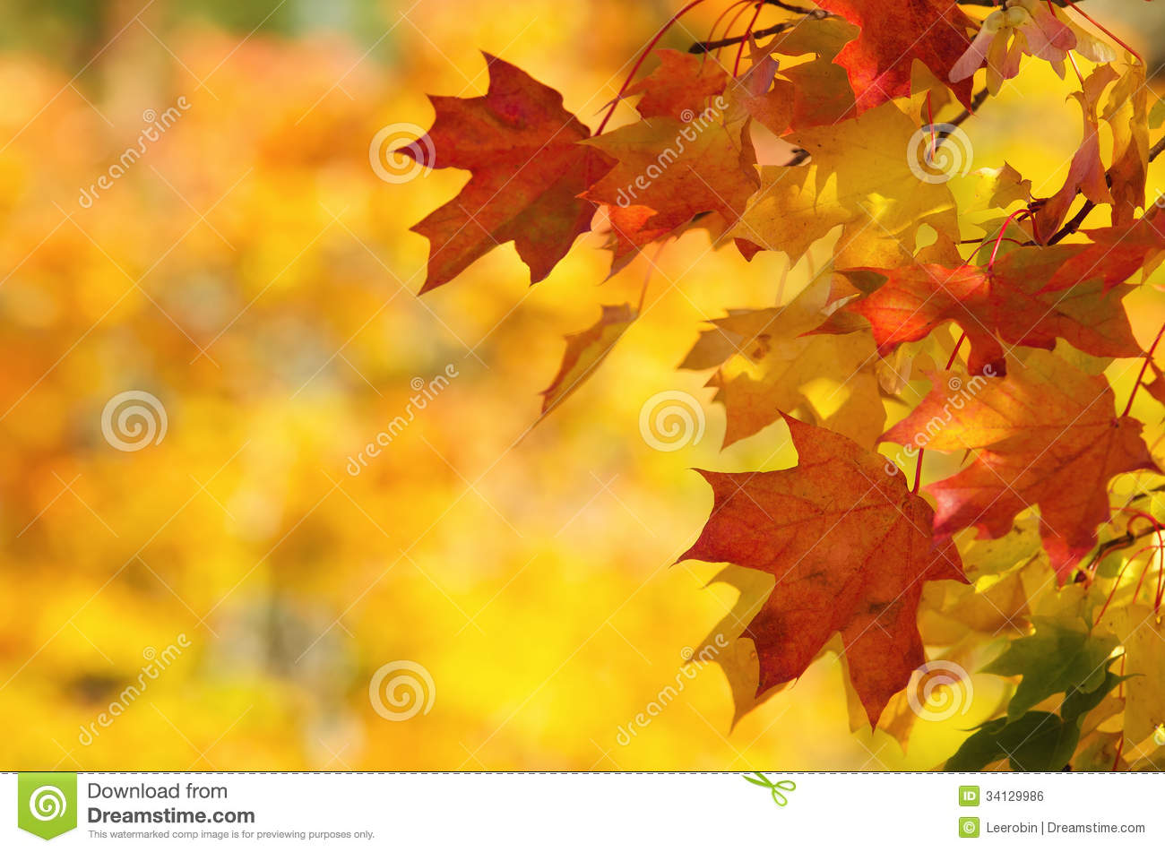 Fall Season Computer Wallpaper Autumn Leaves On Tree Branch Royalty Free Stock Image